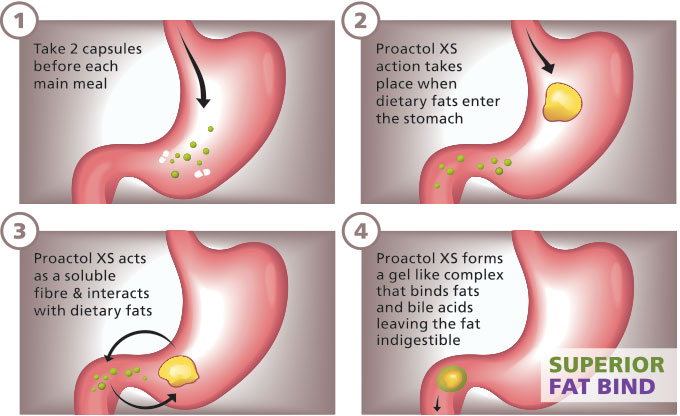 Proactol Xs Review Which Diet Pills